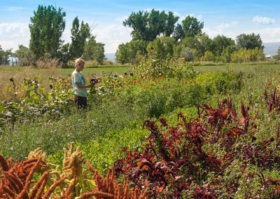 Zephyros Farm field flowers