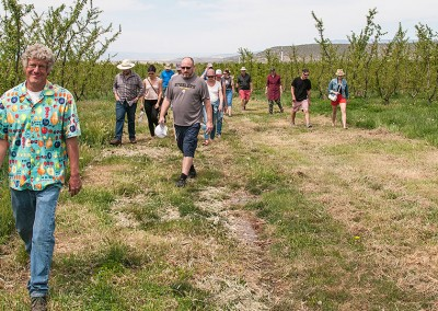 A walk through the orchard