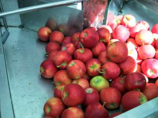 Delicious Orchards apples