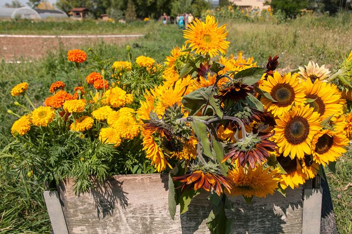 Zephyros flowers image